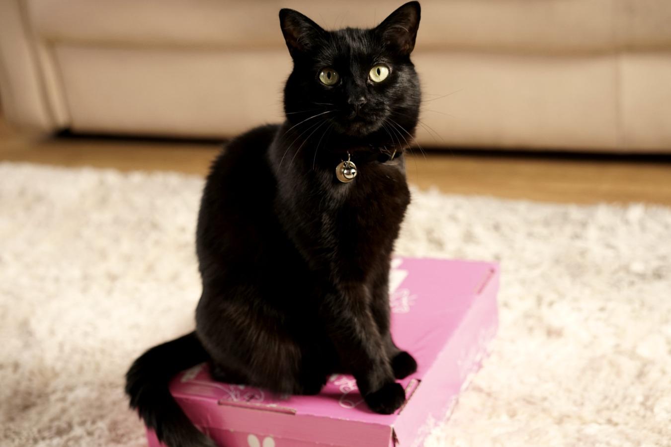 Frip-cat-1